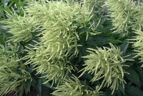 Vaste planten a coen jansen vaste planten - Sterke witte werpen en de bal ...